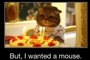 Birthday Cat.jpg
